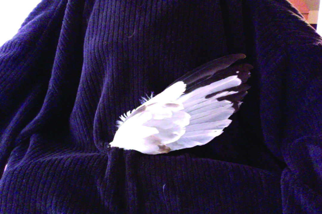 Feather smudge (wing shaped)